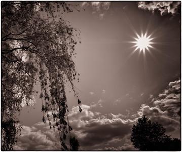 Willow Tree  04 22 12  001