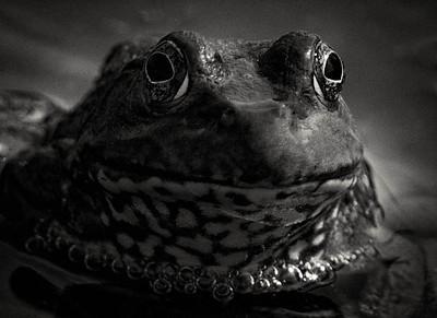 Bullfrog  08 03 09  024 - Edit - Edit