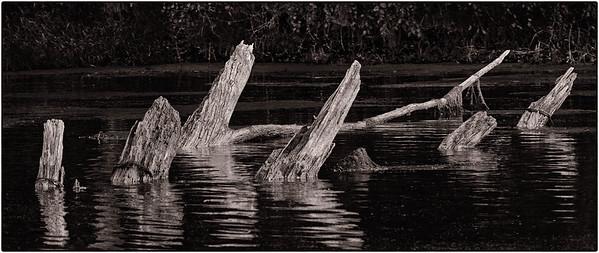 Mississippi River Trees  09 17 10  016 - Edit - Edit
