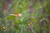 Butterfly3555