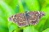 Butterfly3732