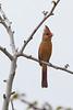 Cardinal3569