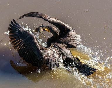 Nature of Sarasota County