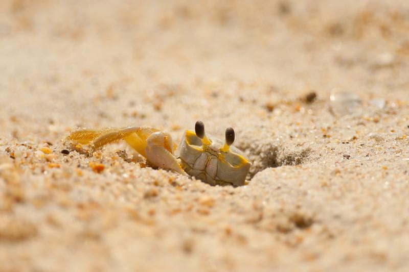 Beach Critters 2011