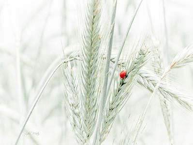 Bug on Rye
