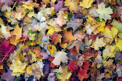 Autumn Textures1