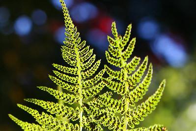 ferns cropped