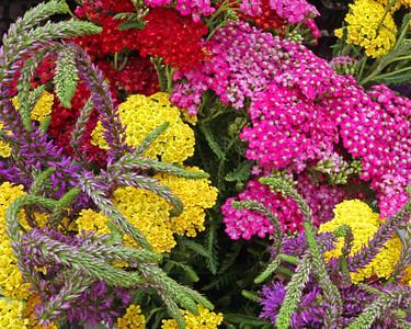 farmers mkt flowers (2)
