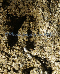 a deer foot print in the dirt