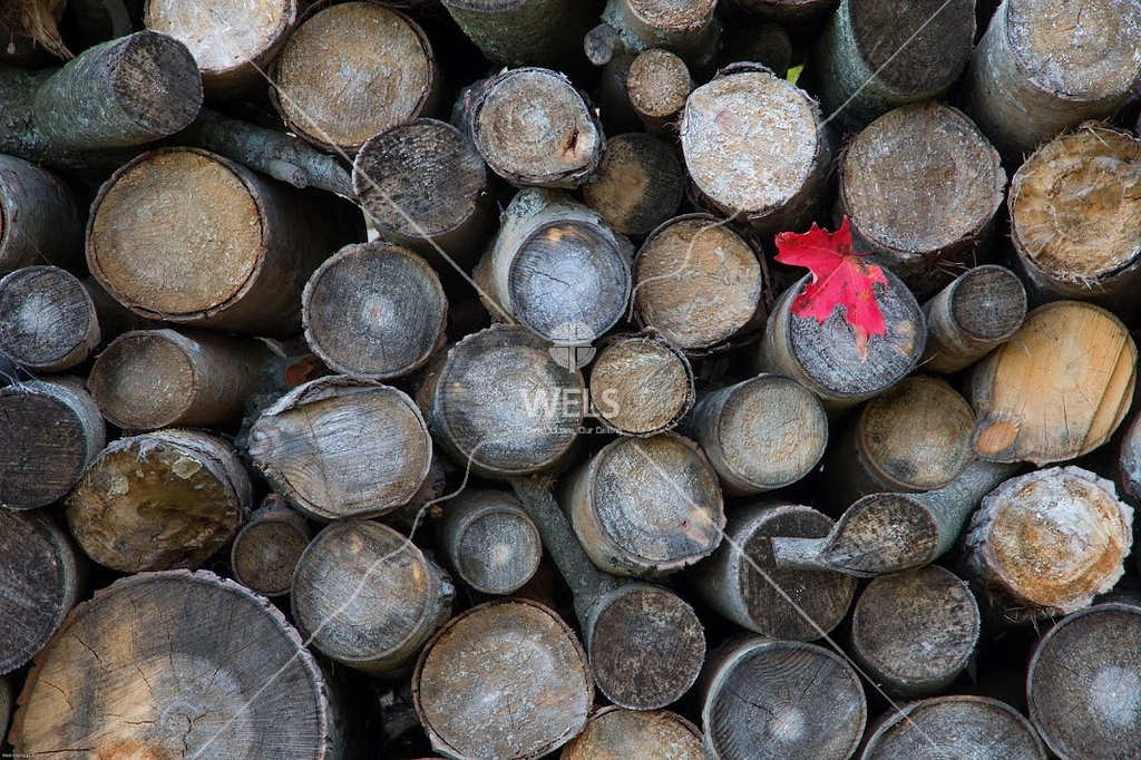 Wood Pile with Red Leaf by mspriggs