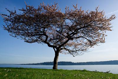 Trees 0009