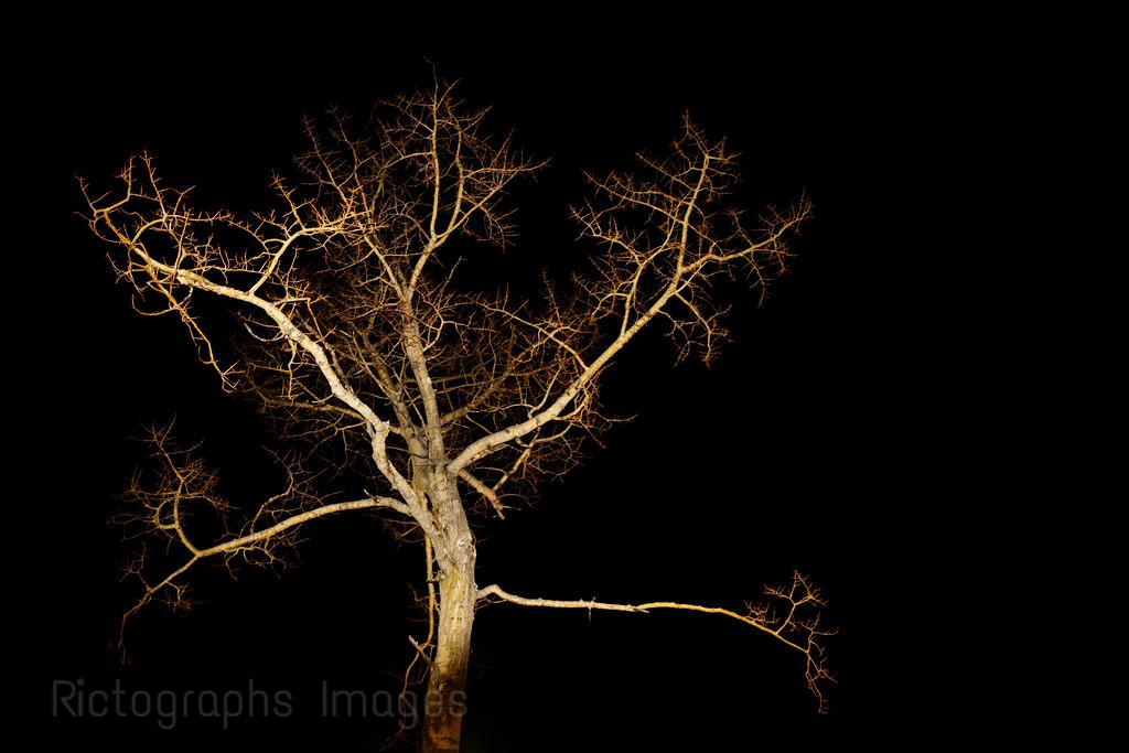 Tree, Rictographs