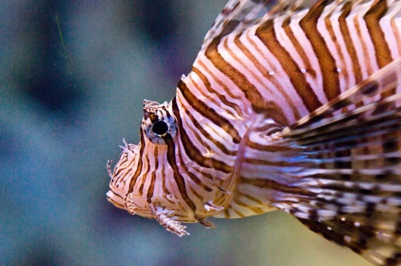 167 Bahamas 2008 Aquarium - Fish