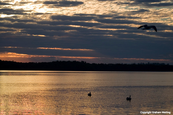 Birds flying over the water at sunrise at Cape Coral in Florida