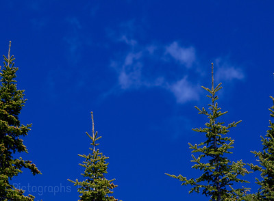 Blue Sky, Green Trees