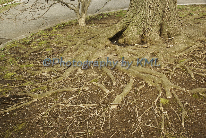 erosion of tree roots over many years