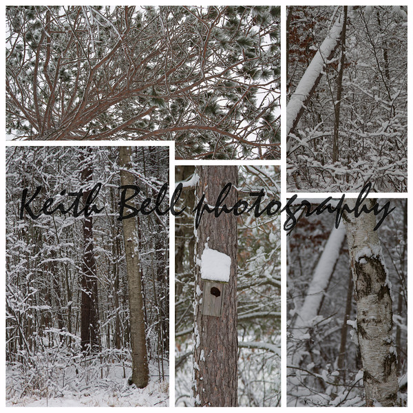 Early December 2011 Rhinelander Winter Storm Collage