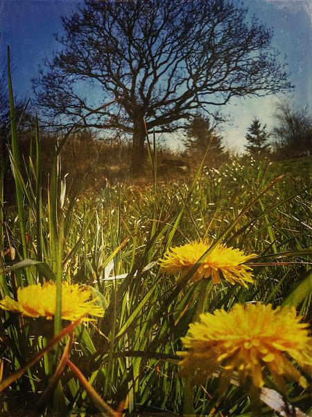 Springtime at Hundvåg