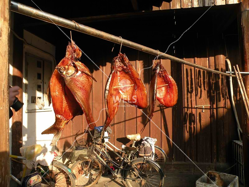 Drying fish, held open with chopsticks, Shaoxing, China by kstellick