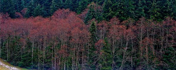 Trees 0006