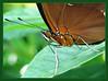 Butterfly3s