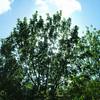 Sun Through Trees 1