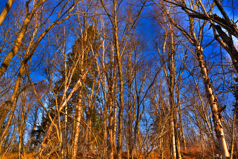 Trees Growing Wild, Rictographs Images