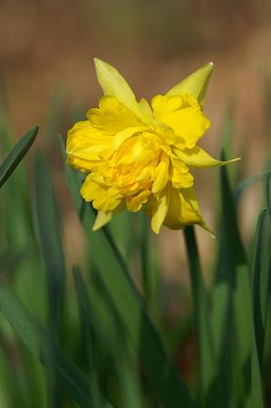 Oh, how I love springtime!
