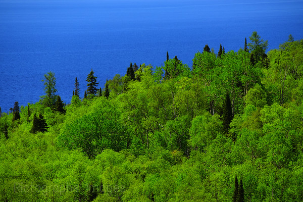 Trees & Lake Superior, Spring 2019