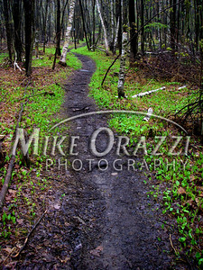A path many have taken at Sessions Woods in Burlington, Connecticut.