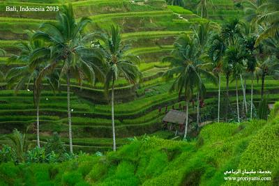 "Bali ""Indonesia"""