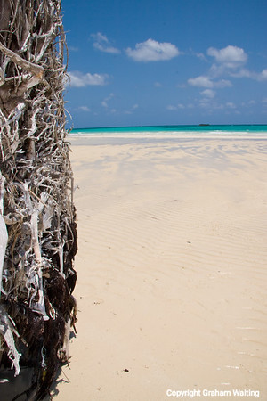 Beach with tree roots
