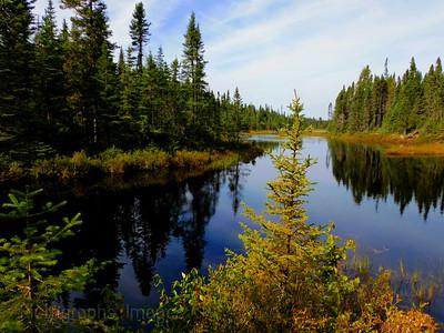 Beaver Pond, 2021