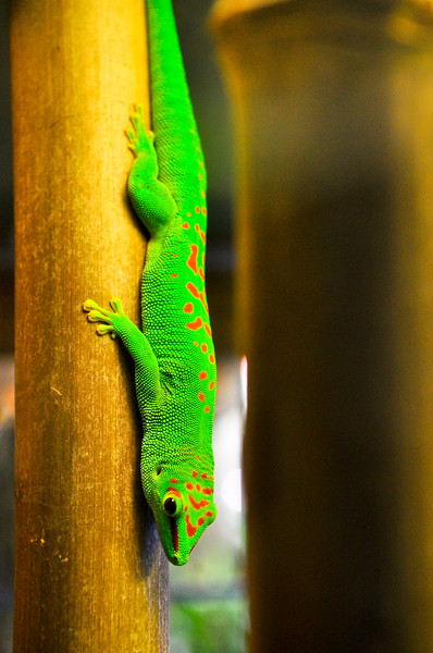 Chameleon glow