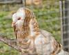 35 Big Joel's Safari Petting Zoo Sept 2019