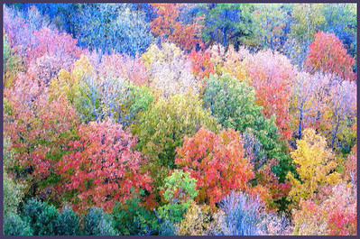 N-H-0011 Autumn's Forest  -  Photography by Scott Campbell