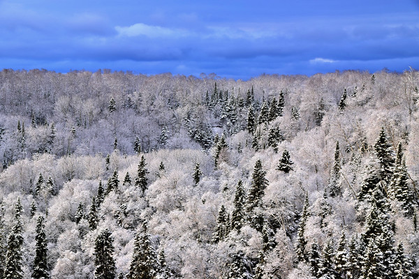 Winter Trees In The Forest, Rictographs Images