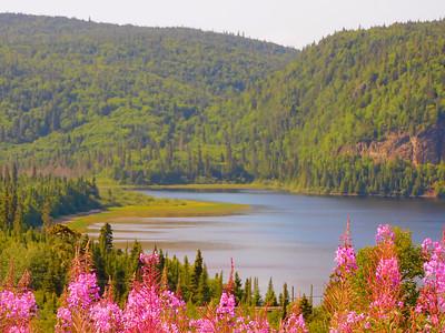 Forest & Lake Landscape, Summer 2020