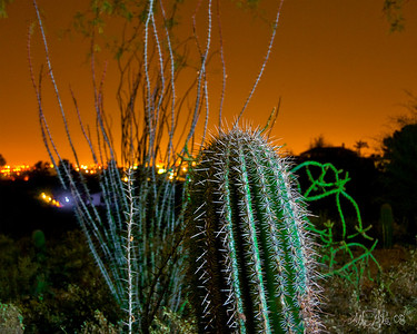 Tucson By Night