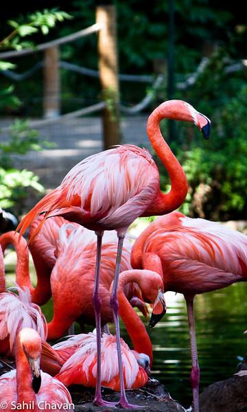 Wildlife & Birds
