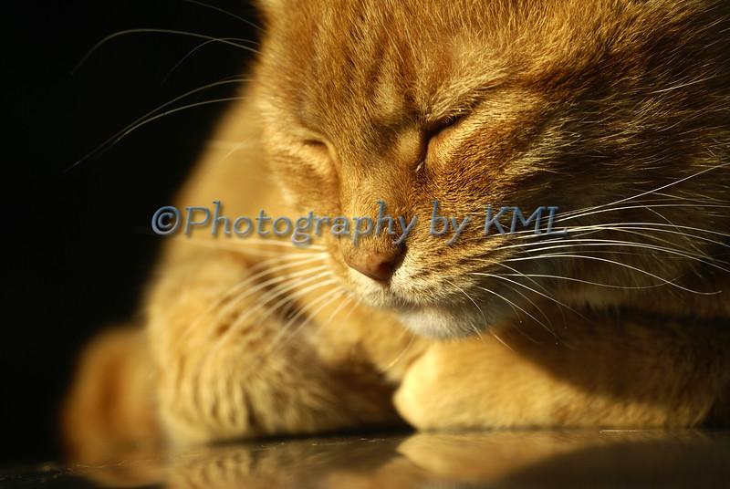 Evening Catnap