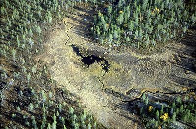 Myrdrag i gammelskog (© Ragnar Våga Pedersen)
