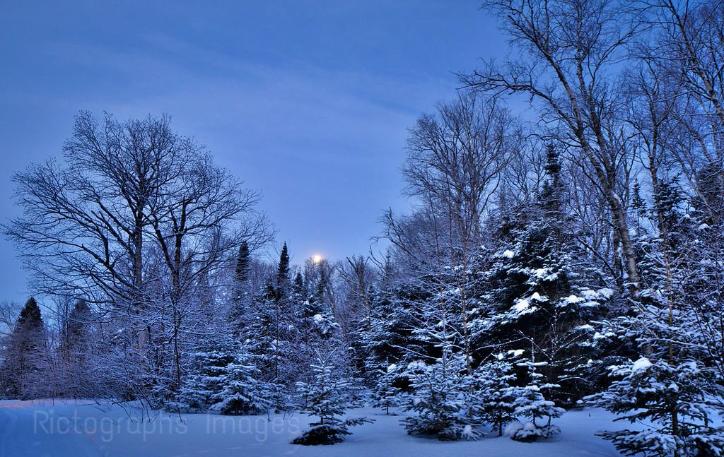 Winter Trees & Snow