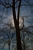 156 Trees In Back Yard 3 darker