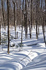 Pictured Rocks National Lakeshore<br /> Cross Country Ski Trails near Munising, MI