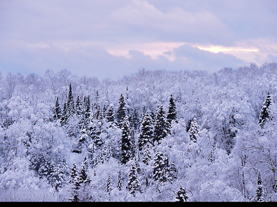 Winter Forest Covered