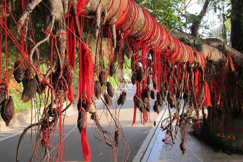 Prayer ribbons at Buddhist temple, Sanya, Hainan China on tree limb by kstellick