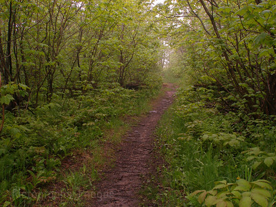 Forest Path Boreal Forest