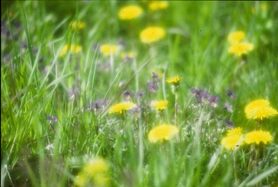 blomstereng (© Ragnar Våga Pedersen)