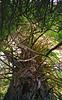 Calif - Klamath (Trees Of Mystery)